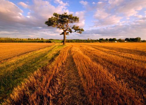 Mayland Tree