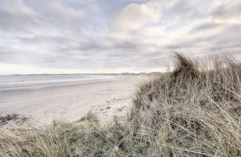 Marram Grass, Beadnell, Northumberland